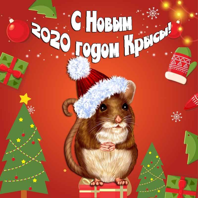 100+ Красивые Короткие Поздравления на Новый год 2020 в стихах и прозе. Короткие стихи на год Крысы – поздравления с 2020-м годом!